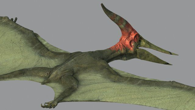 Pterodon | 3D Animals | Pinterest