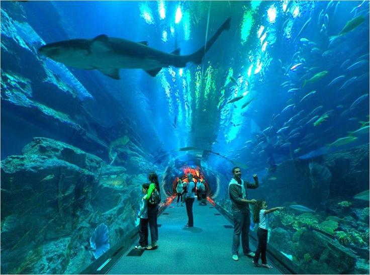 Dubai Aquarium & Underwater Zoo Aquariums / fish tanks Pinterest