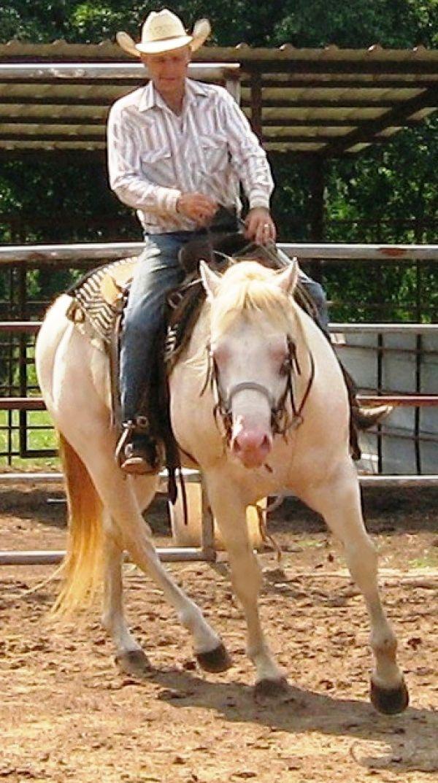 Perlino quarter horse stallion - photo#5