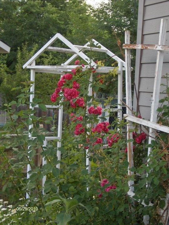Climbing rose shabby trellis gardening landscaping outbuildings pinterest - Climbing rose trellis ...