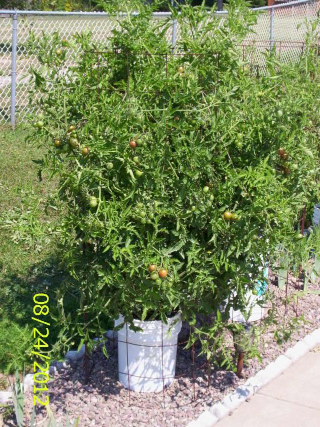 how to use wire tomato cages