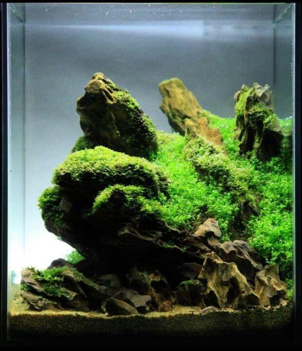 nice hardscape Aquarium Pinterest
