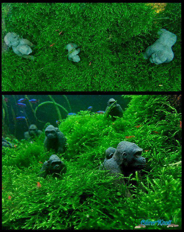 oliver knott Fish + tanks Pinterest