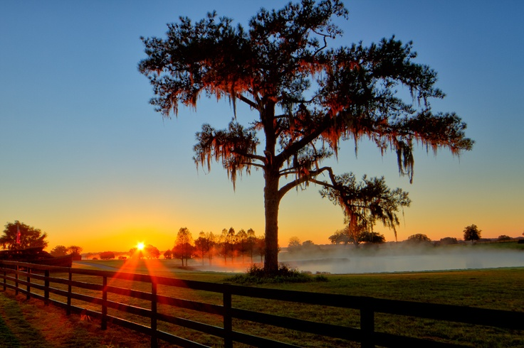 Image result for horses in pasture at sunrise