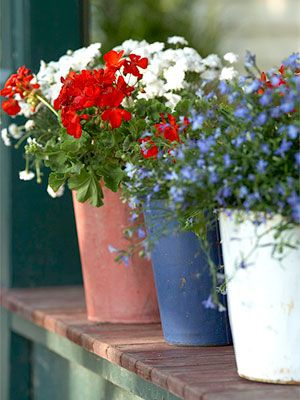 pretty composition of flowers in pots