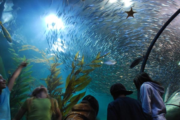 San Francisco Aquarium Spots I Love And Want To Love