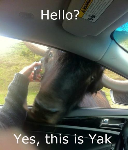 Hello? Yes, this is Yak