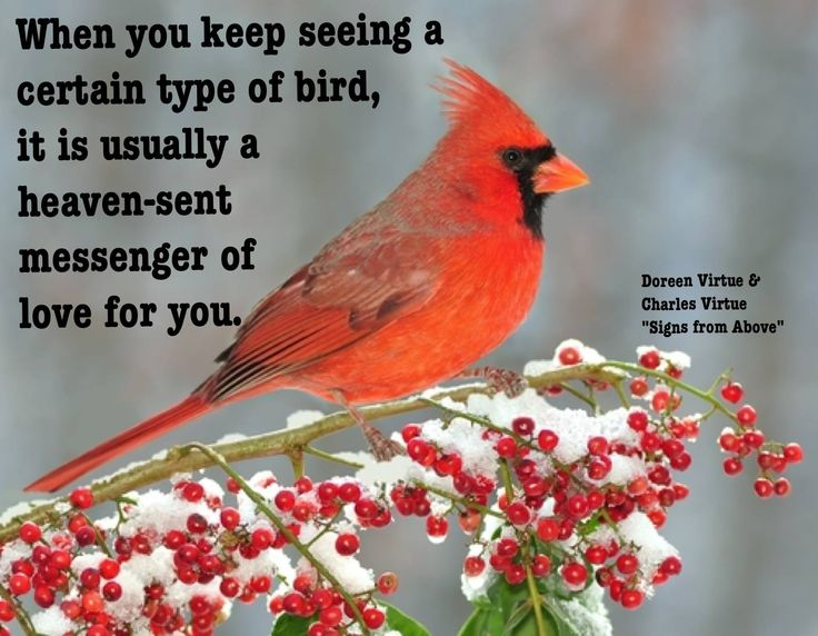 When You Keep Seeing A Certain Type Of Bird It Is Usually A Heaven Sent Messenger Of Love