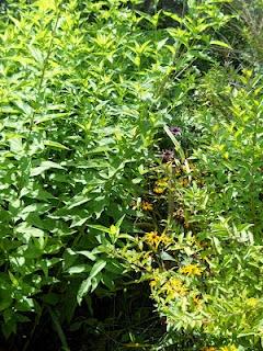 herbal medicine schools near me