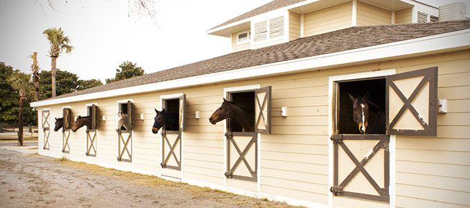 Seabrook Island Horseback Rides