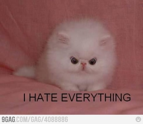 #hate #everything #funny #lol #kitten #pussycat #cat