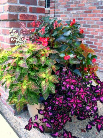 We create create colorful planters that thrive in FULL shade.
