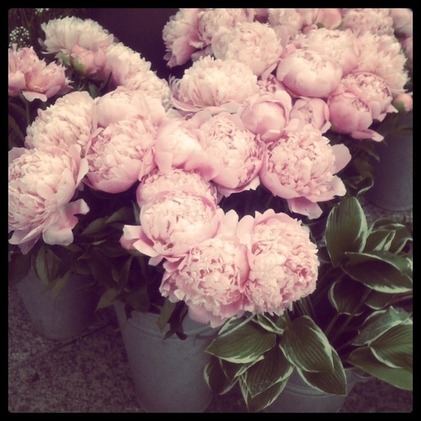Peonies Season Unique Of Peony season | Things we love | Pinterest Photo
