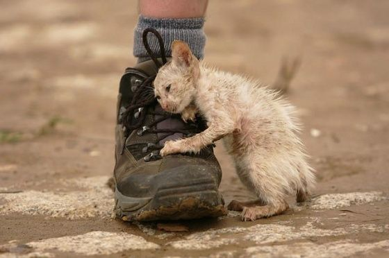 """""""let people know there are animals out there that need us desperately. And to always treat them with the same dignity and kindness we would like to recieve ourselves."""" Photo: Kitten, October, 2011, Thailand flooding disaster; unknown photographer."""