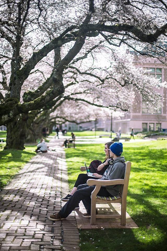 University of washington essay