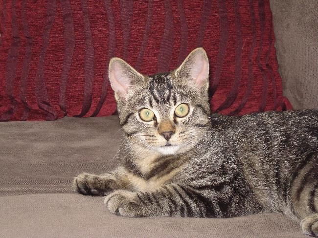 ... cat is a male tabby aged four years. He is an outdoor cat who enjoys