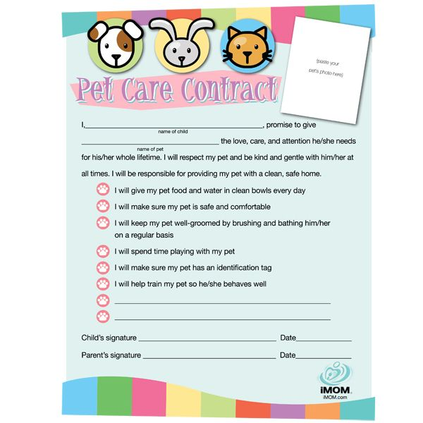 pet care contract brownie girl scout projects pinterest