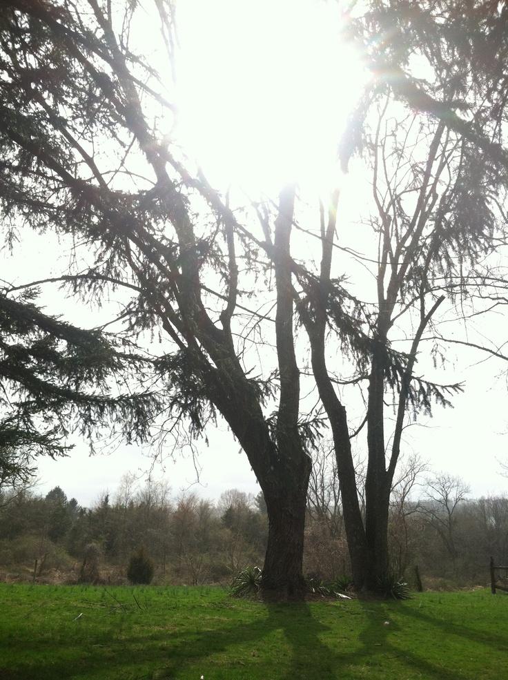Sunshower at the Home Vineyard # Sunshower Home_164258