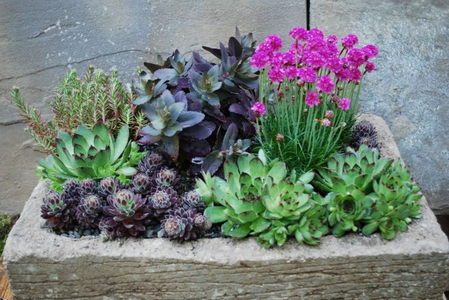Small Succulent Garden Plants Pinterest