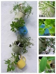 Coffee cup gardening ( herbs)