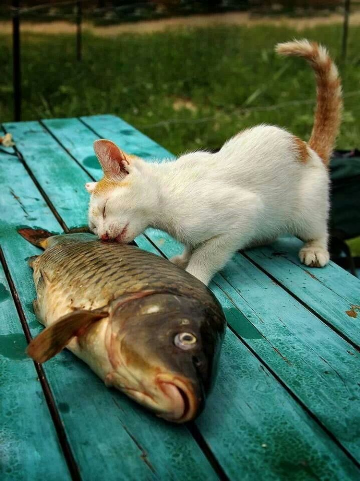 Cat and fish amazing cats pinterest for Fish video for cats