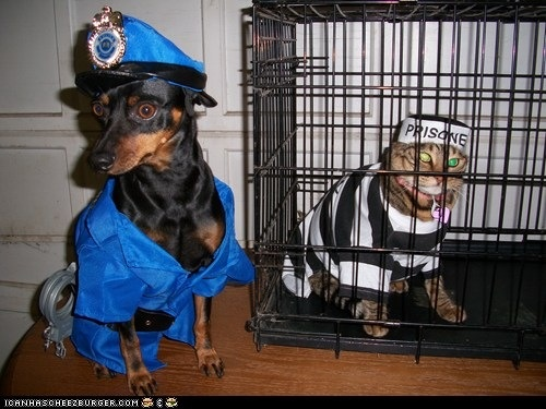 Funny Halloween Pictures With Dogs