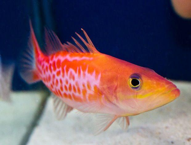 Dr Seuss Fish Reef Safe Fish Pinterest