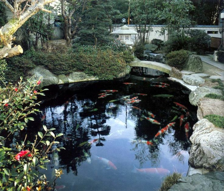 This pond looks deep koi pinterest for How deep should a koi pond be