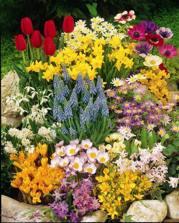 Spring gardening ideas interior design garden pinterest for Spring garden ideas