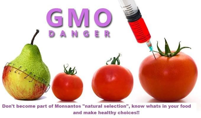 what is so important about genetically Gmo speech study guide by leslielmiller5592 includes 12  genetically engineered food is not natural and  so it's important for the consumer to decide if they.