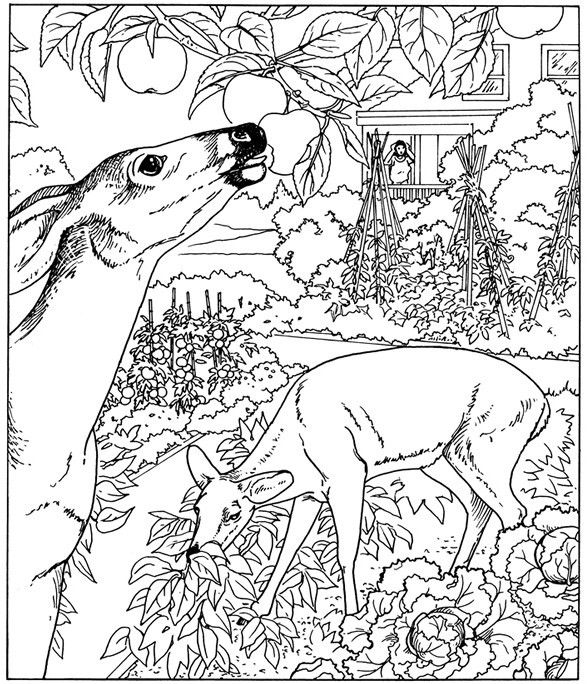 Advanced Landscape Coloring Pages : Nature coloring pages for adults parts of a plant
