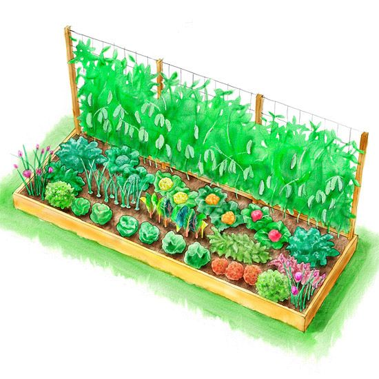 Planting plans inspired by the white house kitchen garden for Kitchen garden design plans