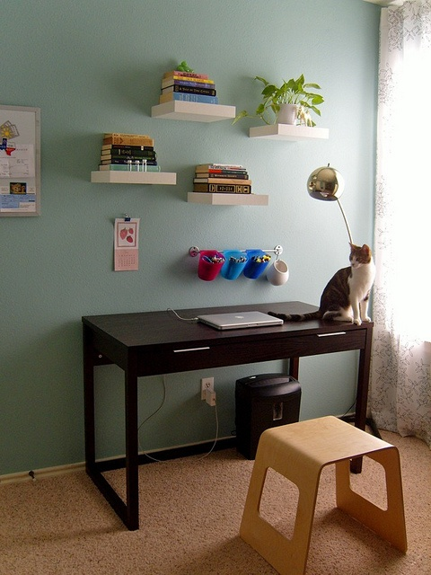 Floating cat shelves : ... same floating shelves for the cat re used human. great design