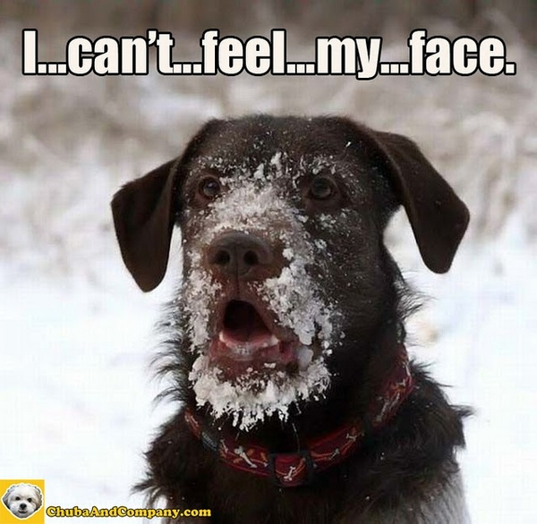 Frozen dogs-are-so-cute