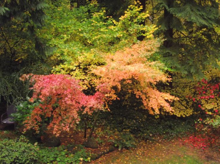 Vine Maple | Autumn Equinox | Pinterest