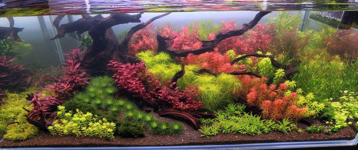aquarium background 55 gallon 120 gallon Dutch Planted something or ...