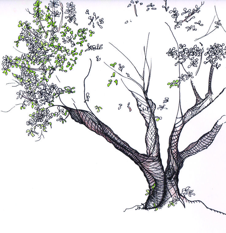 Line Art Of Tree : Line drawing fairy tree drawings pinterest