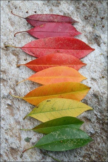 Color scheme leaves