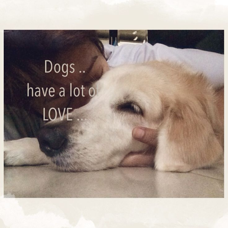 Dogs have a lot LOVE | keiko-hiro | Pinterest