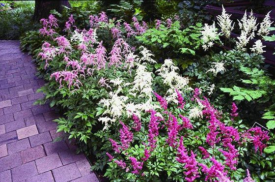 Shade garden plants outside the home pinterest for Garden trees for shade