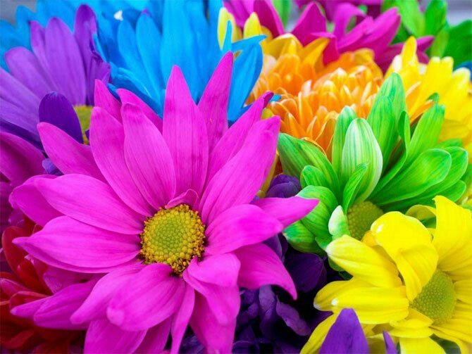 Bright colors for flowers | Colors to Brighten the Day ...