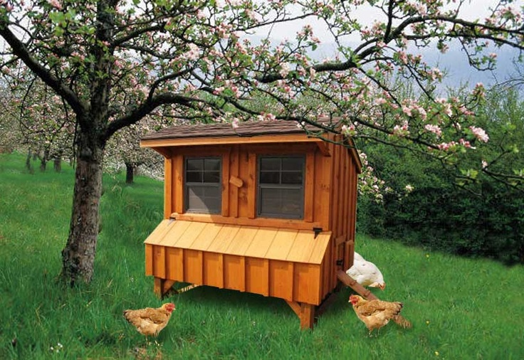 coop guide topic 4x6 chicken coop