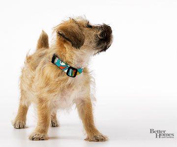 Dog Training Tips | Cute pets