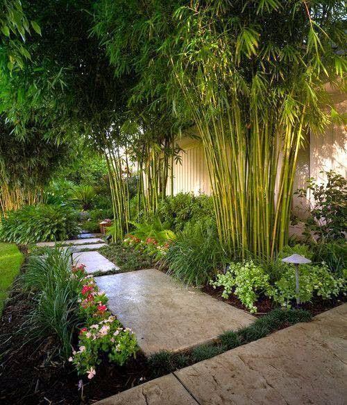 Tropical Bamboo Garden Garden Ideas Pinterest