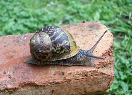 gastropods. snails and dragonflies Pinterest