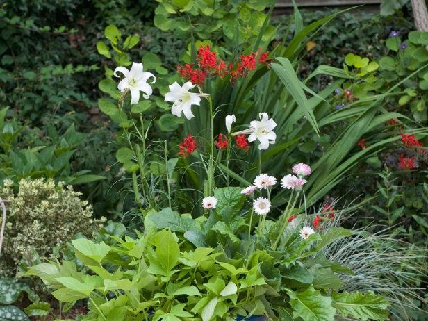 Fragrant Plants Gardening Tips Tricks And Ideas Pinterest