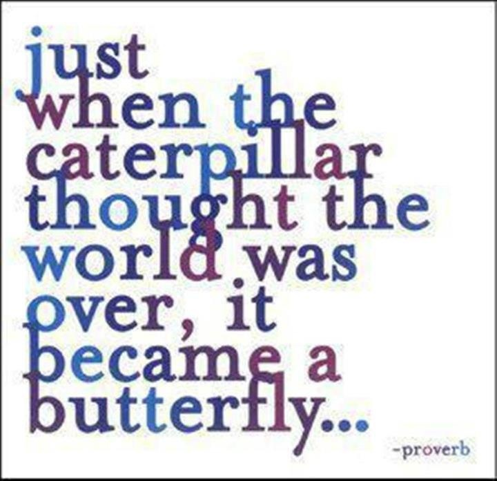 Just when the caterpillar thought the world was over, it became a butterfly... #Life #Quote #Proverb