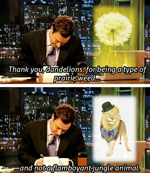 Jimmy Fallon Thanking Dandelions Thank You Notes Pinterest Jungle Animals Funny Pics And