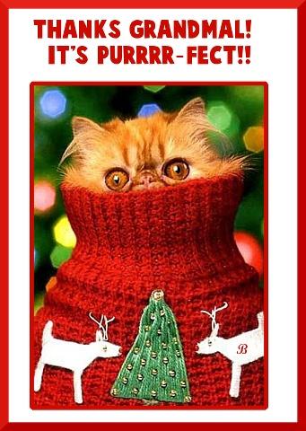 merry christmas   humor pinterest