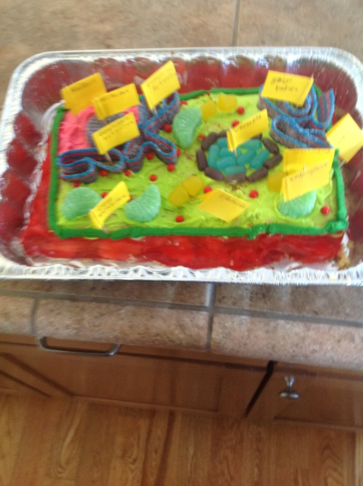Plant cell cake project